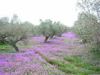 31 Beautiful Landscape Gardening Jobs In Spain U2013 Izvipi.com